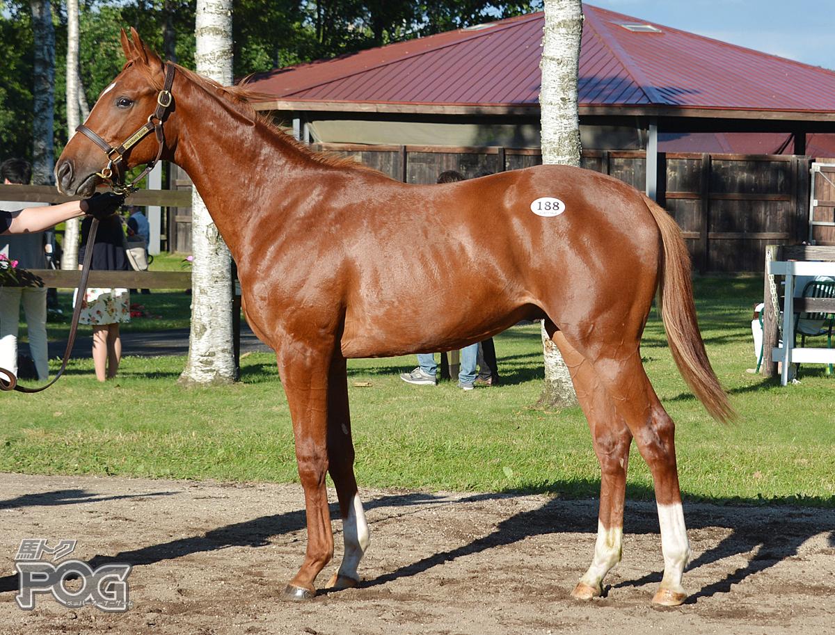 ビップフェリックスの馬体写真