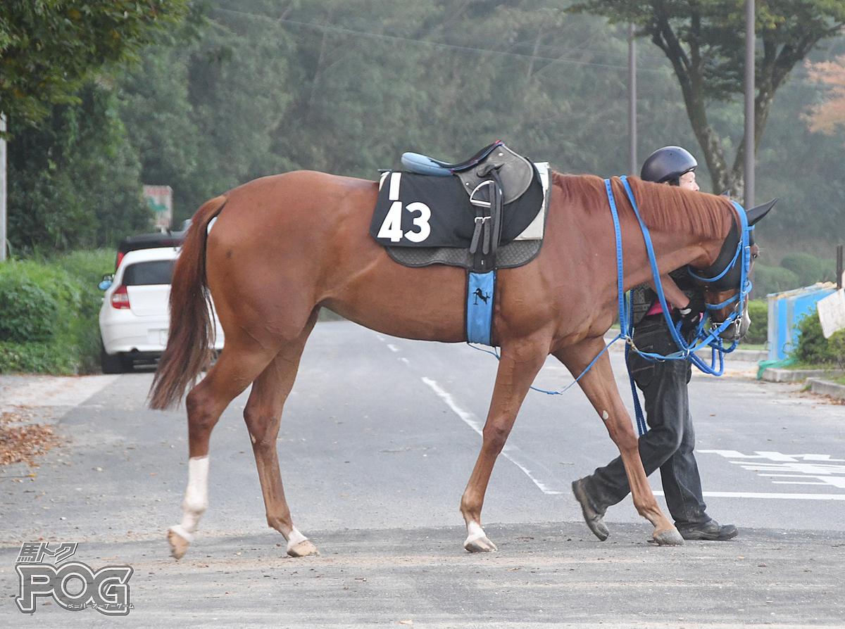ヴォーティブの馬体写真