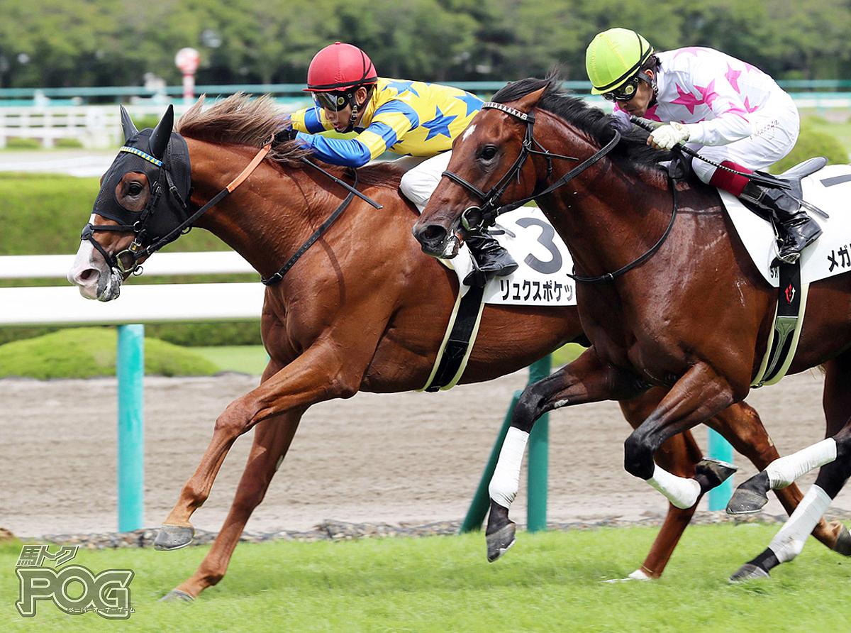 リュクスポケットの馬体写真
