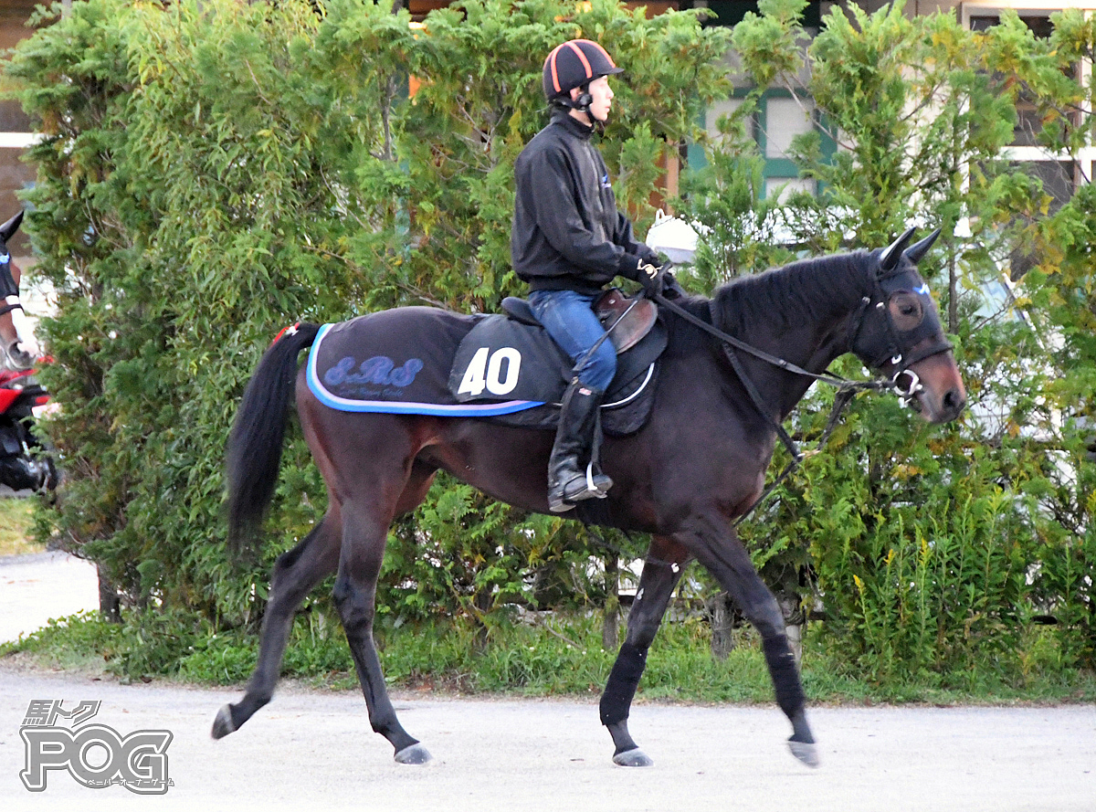 アドマイヤクィーンの馬体写真