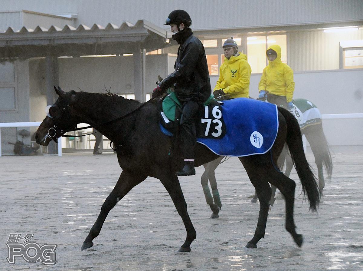 サトノグロワールの馬体写真