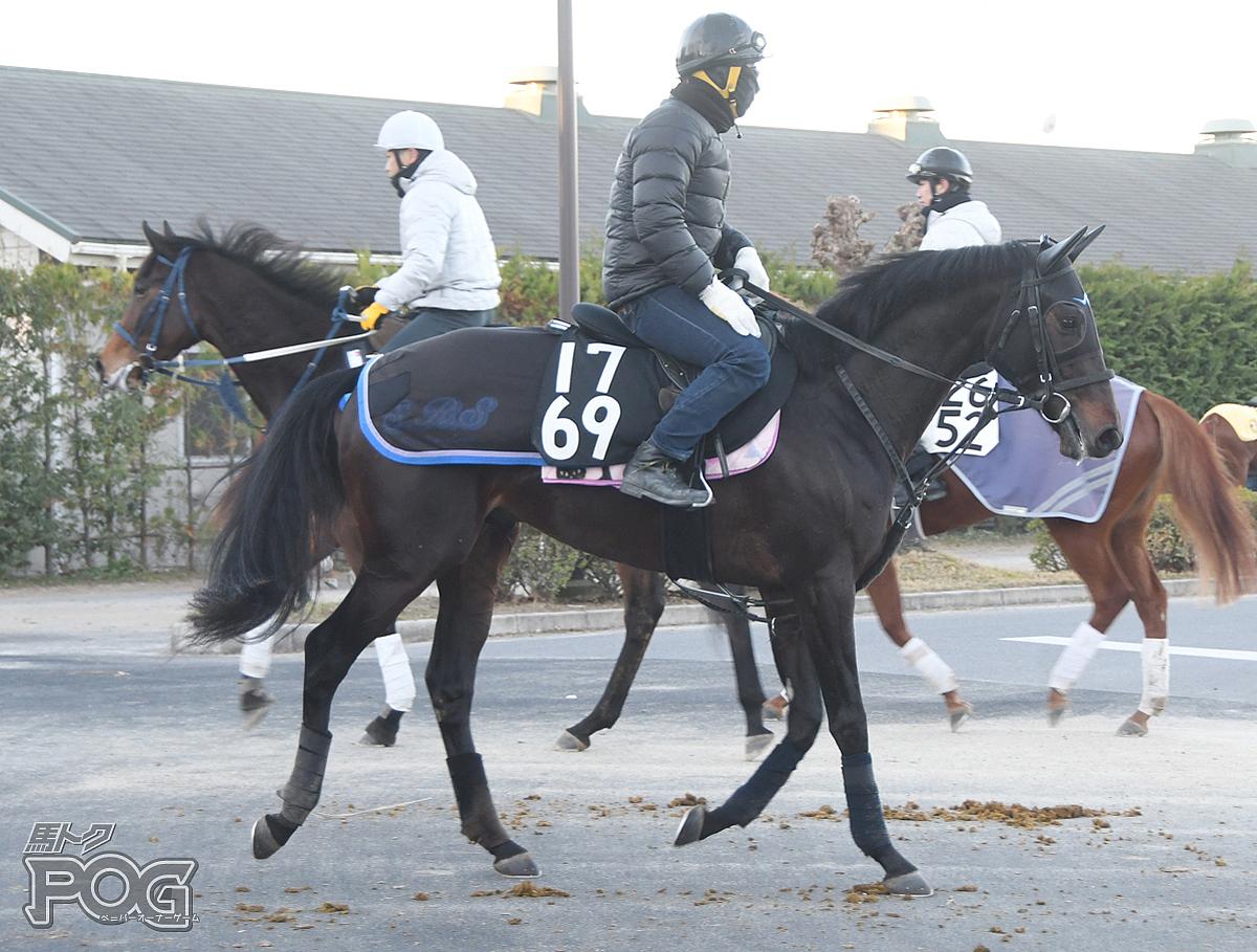 アンジェロッティの馬体写真