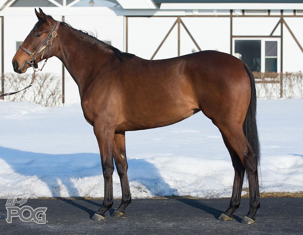 ラストプリマドンナの馬体写真