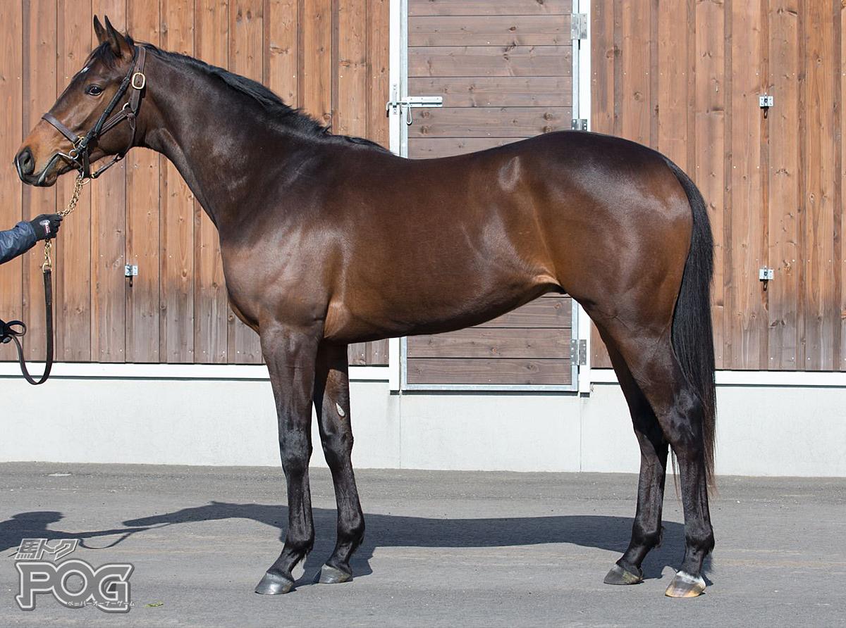 ヴェルトゥアルの馬体写真