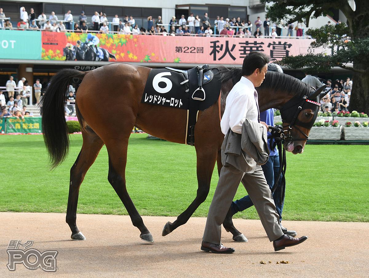 レッドシャーロットの馬体写真