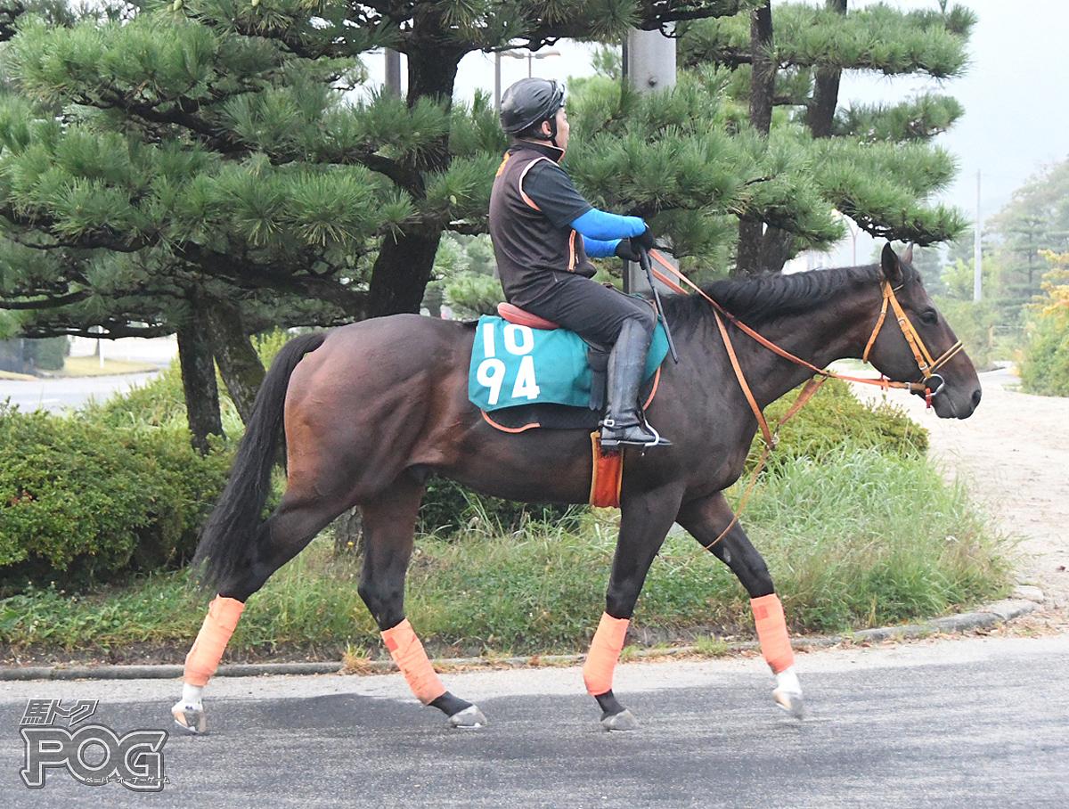 ガナドゥールの馬体写真