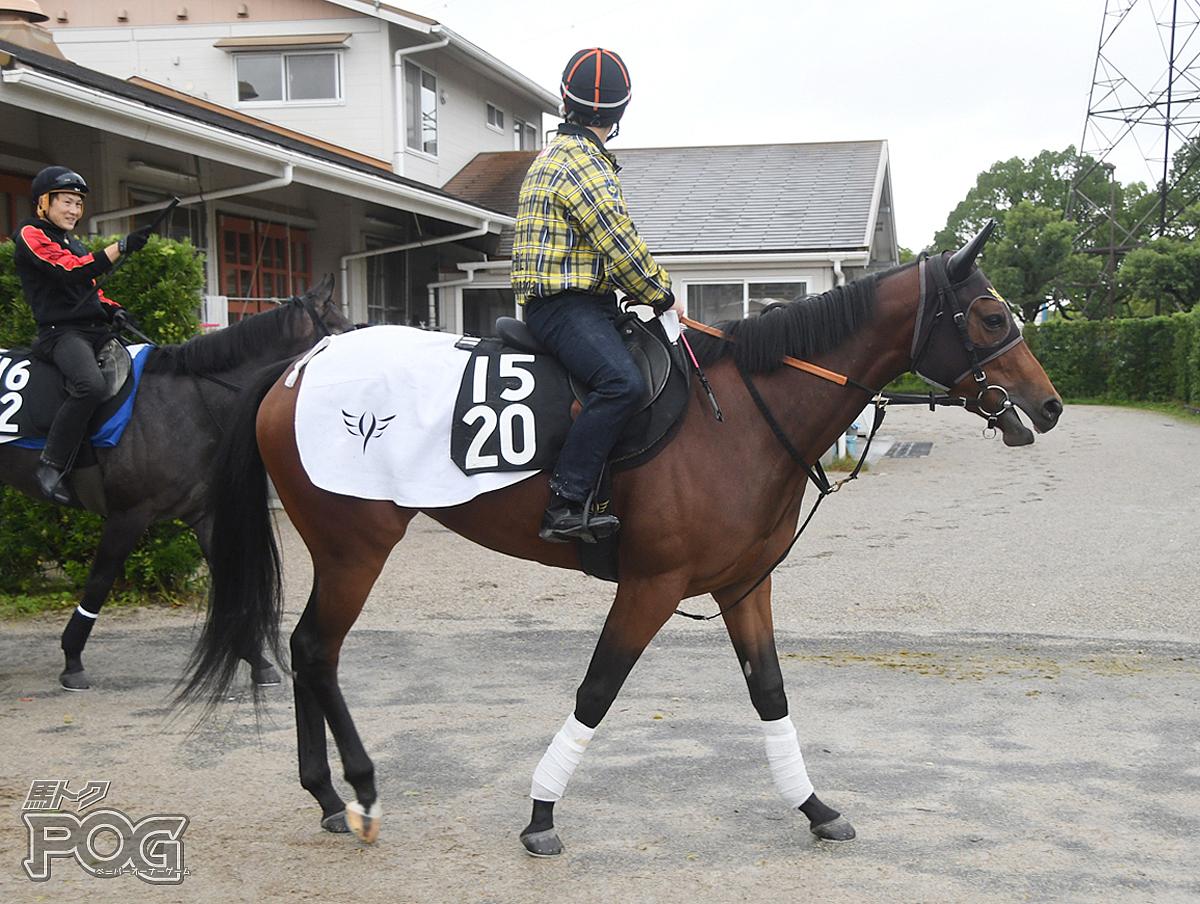 ナイトレインの馬体写真