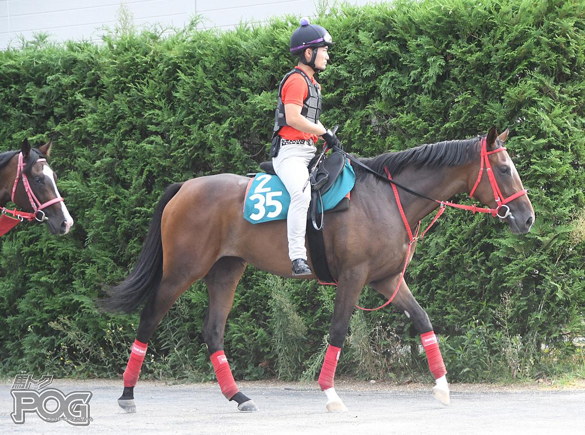 レディバードの馬体写真