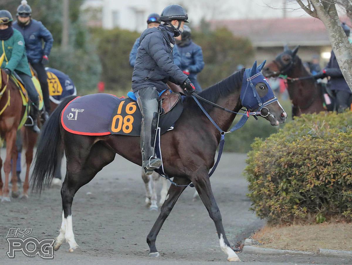 レッドイリーゼの馬体写真