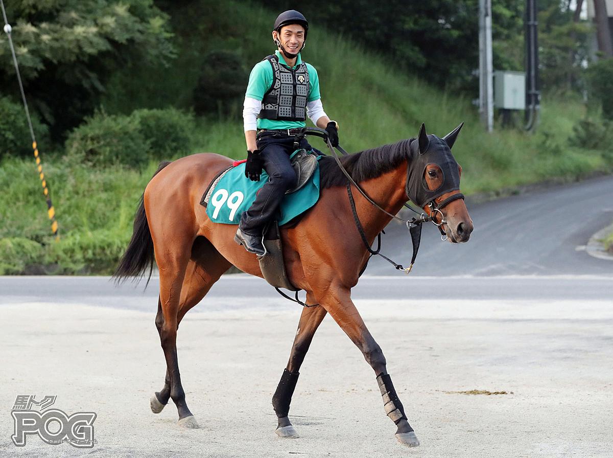 スターリーステージの馬体写真
