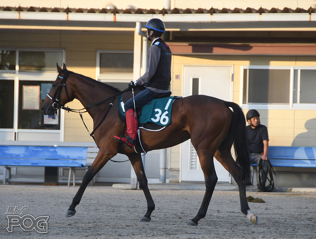 ヴィグールの馬体写真
