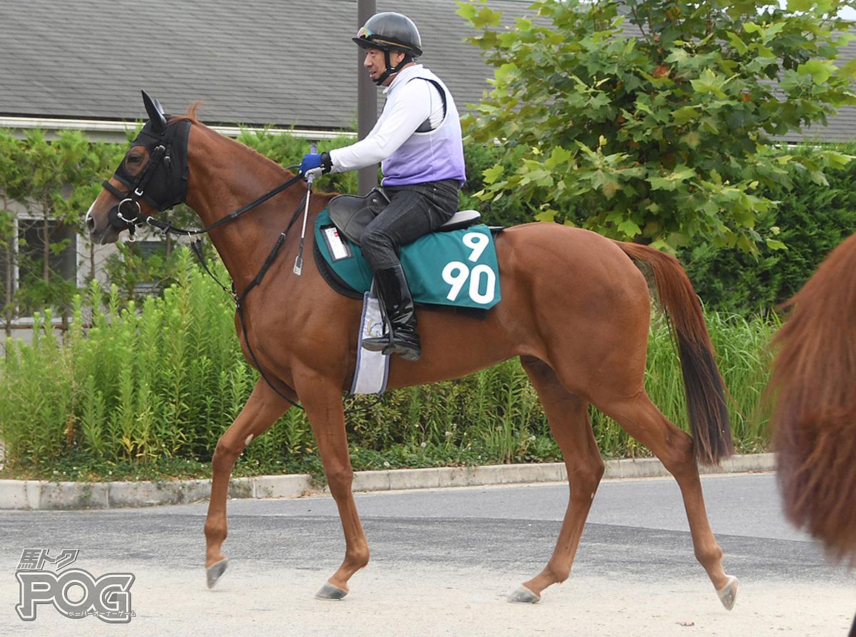 サーキュラーリングの馬体写真