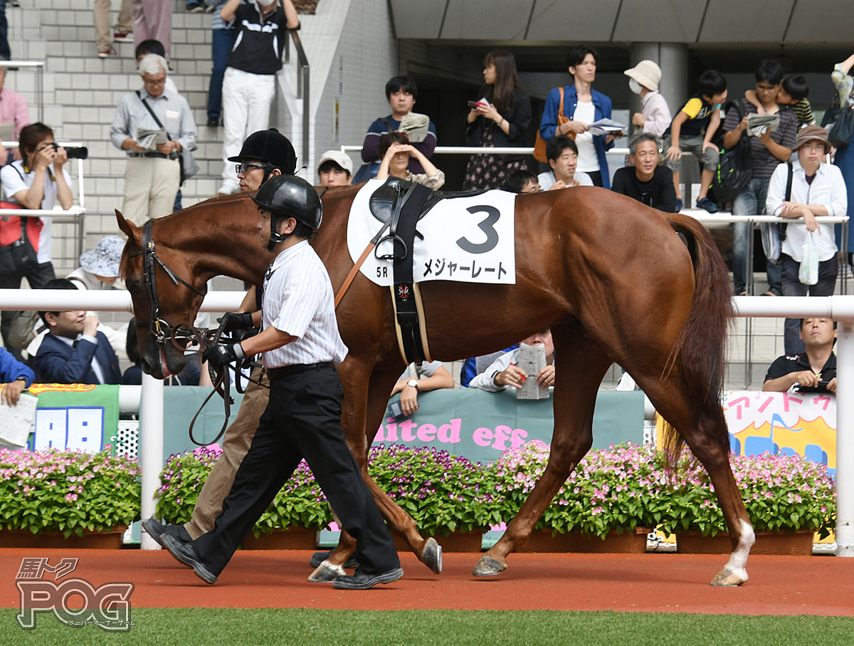 メジャーレートの馬体写真