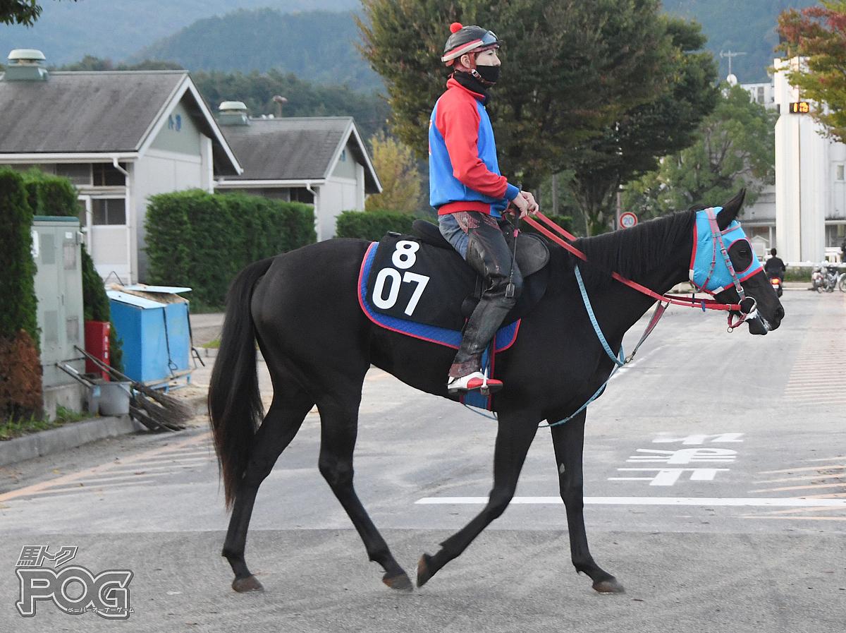 バードランドの馬体写真