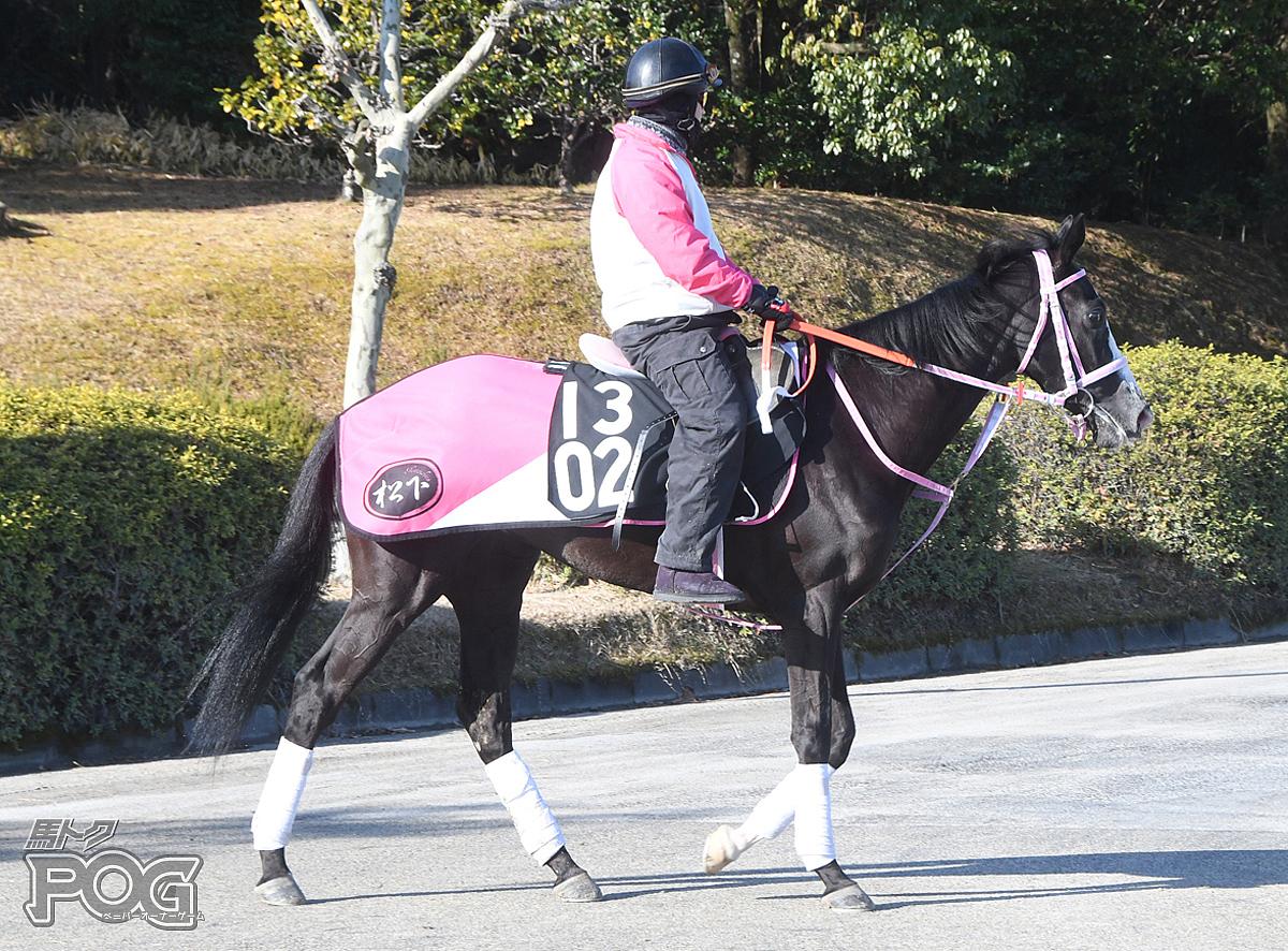 カランドリエの馬体写真
