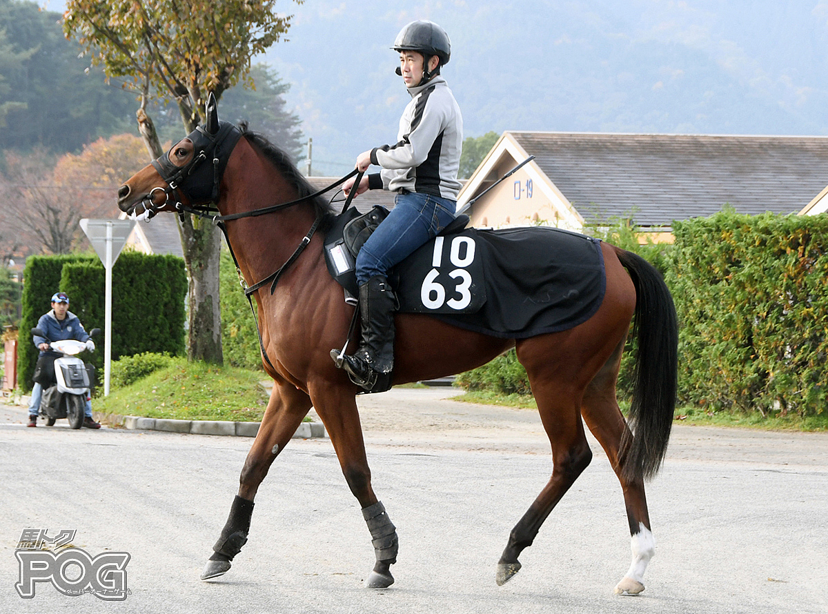 メリッサーニの馬体写真