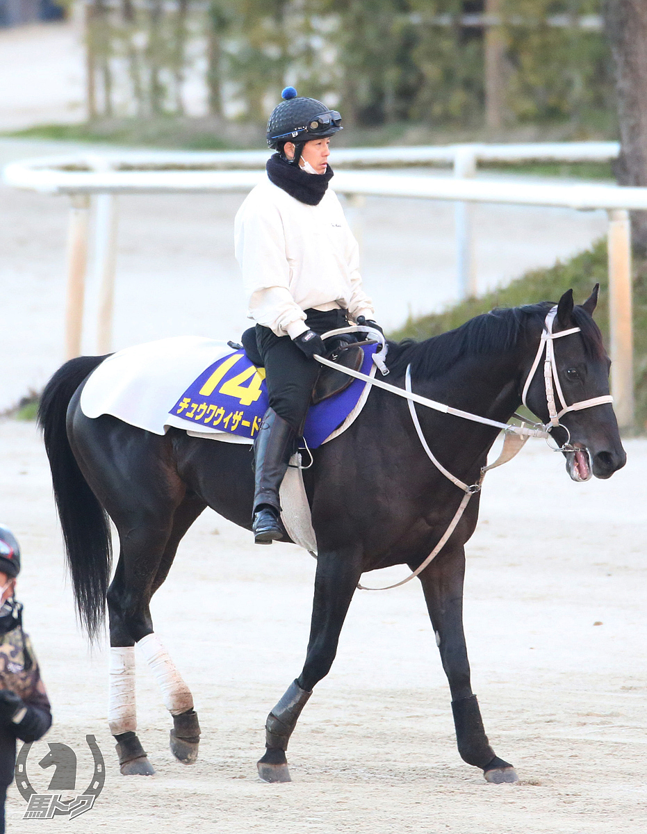 チュウワウィザードの馬体写真