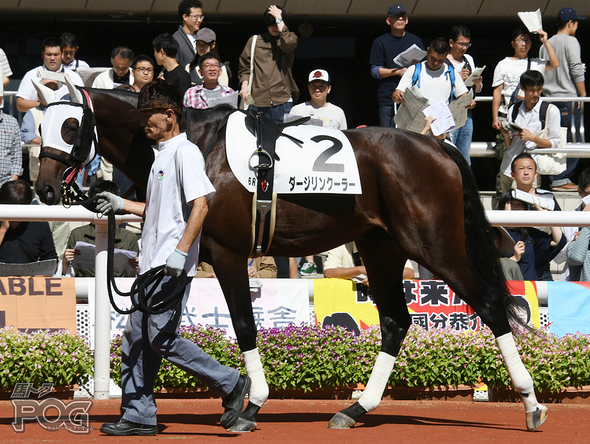 ダージリンクーラーの馬体写真