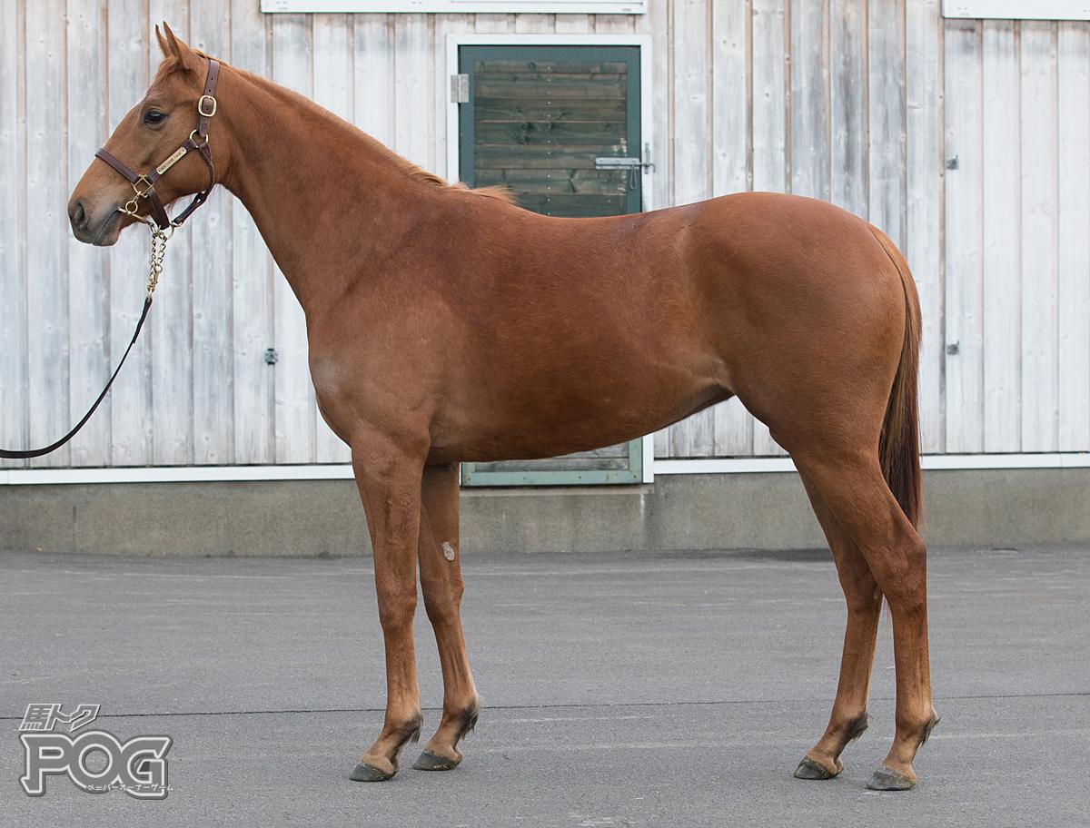 エルディアマンテの馬体写真
