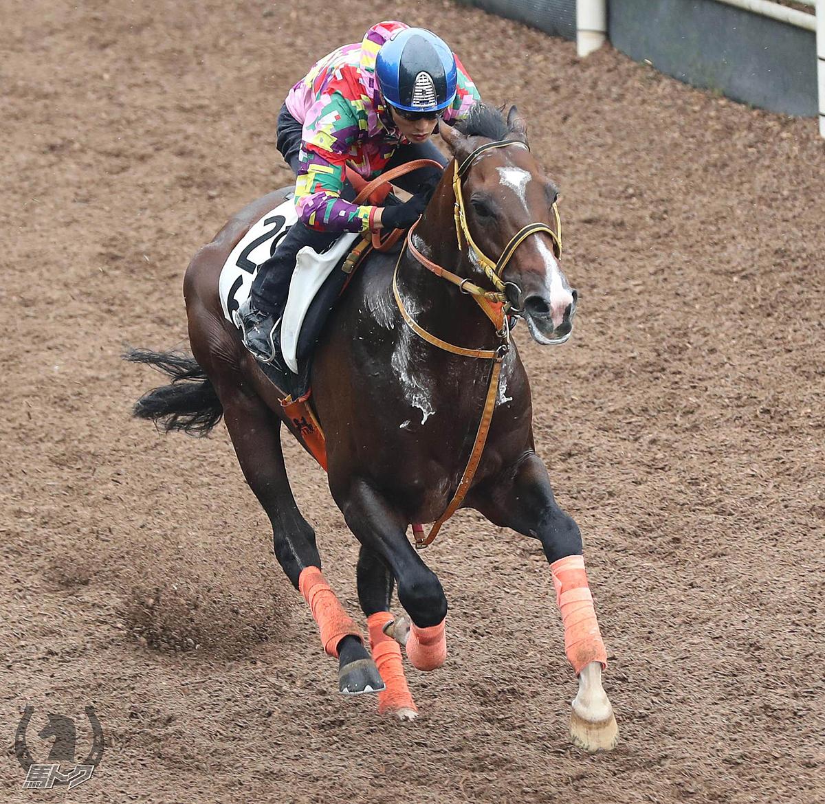 レノヴァールの馬体写真