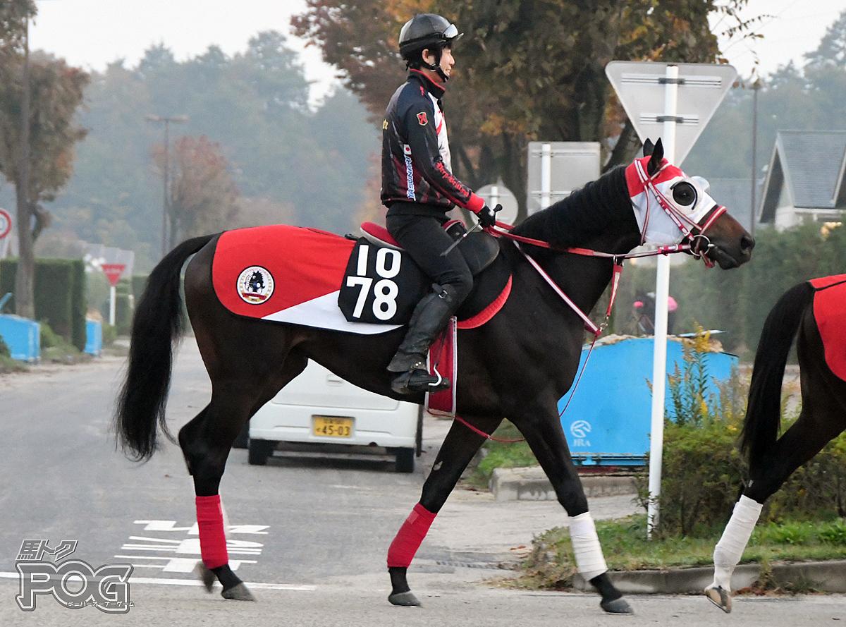 モートゥスの馬体写真