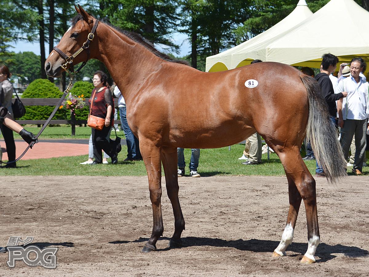 ステラーインパクトの馬体写真