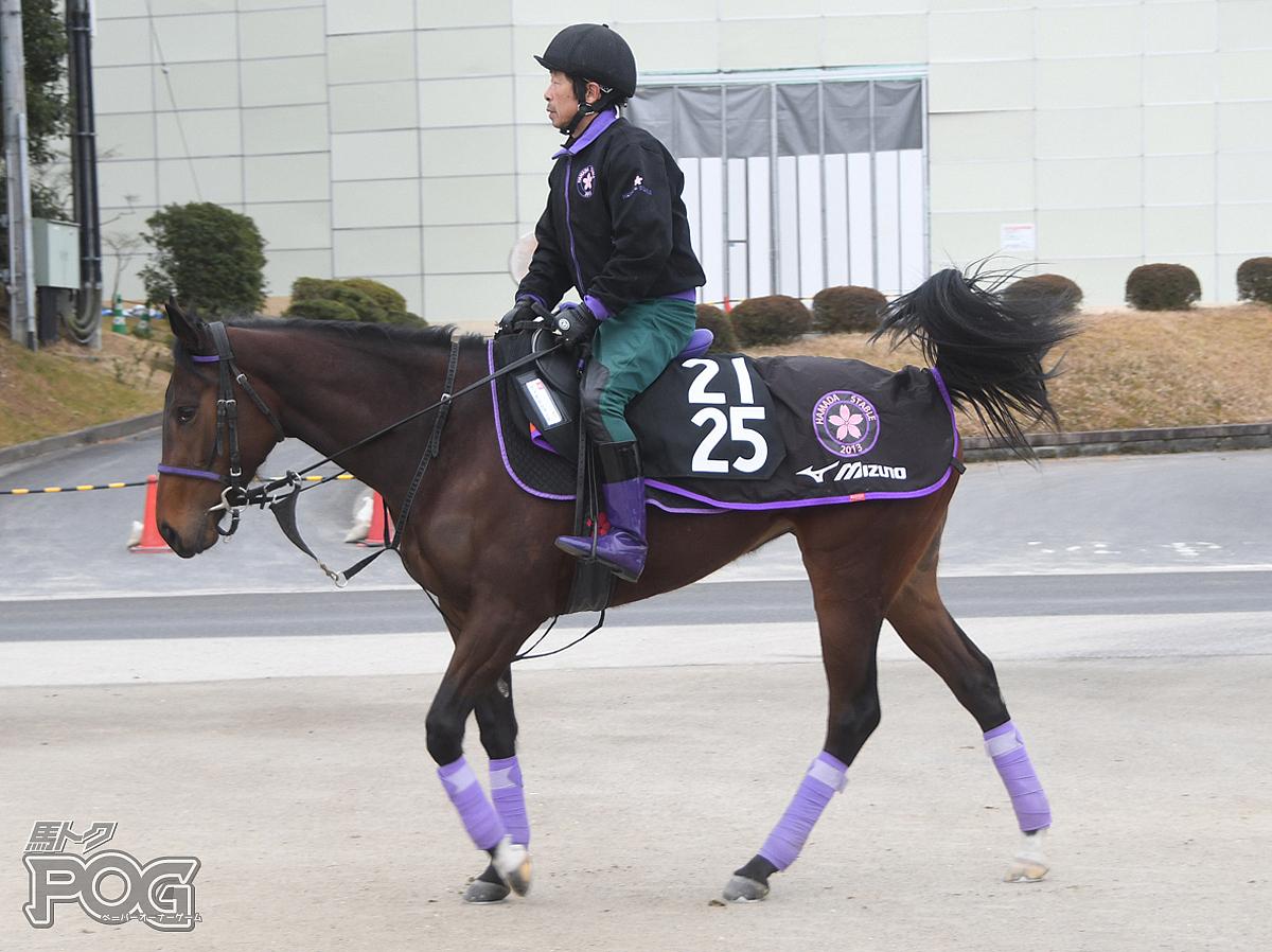ヴィオラフォンスの馬体写真