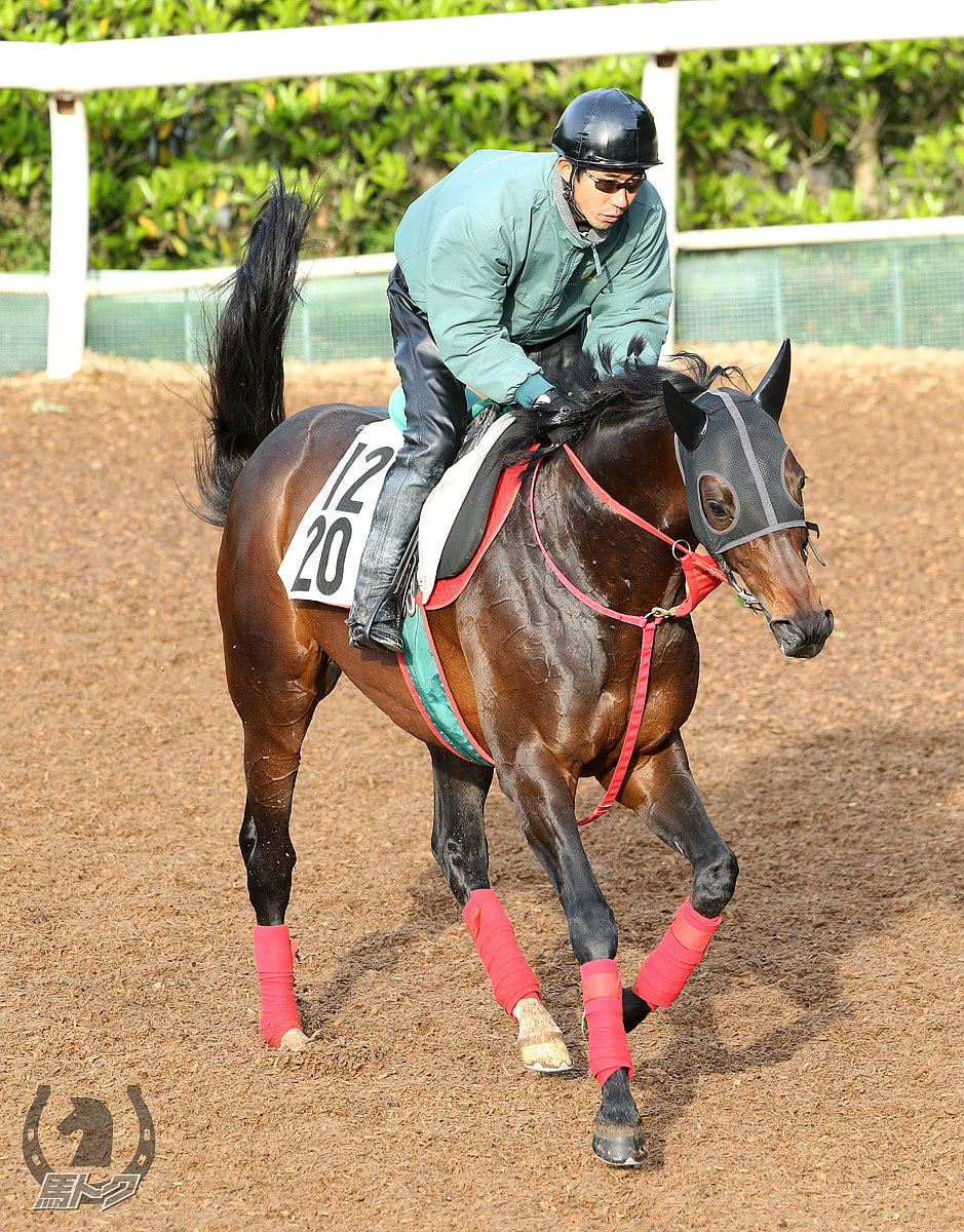 ダノンマジェスティの馬体写真