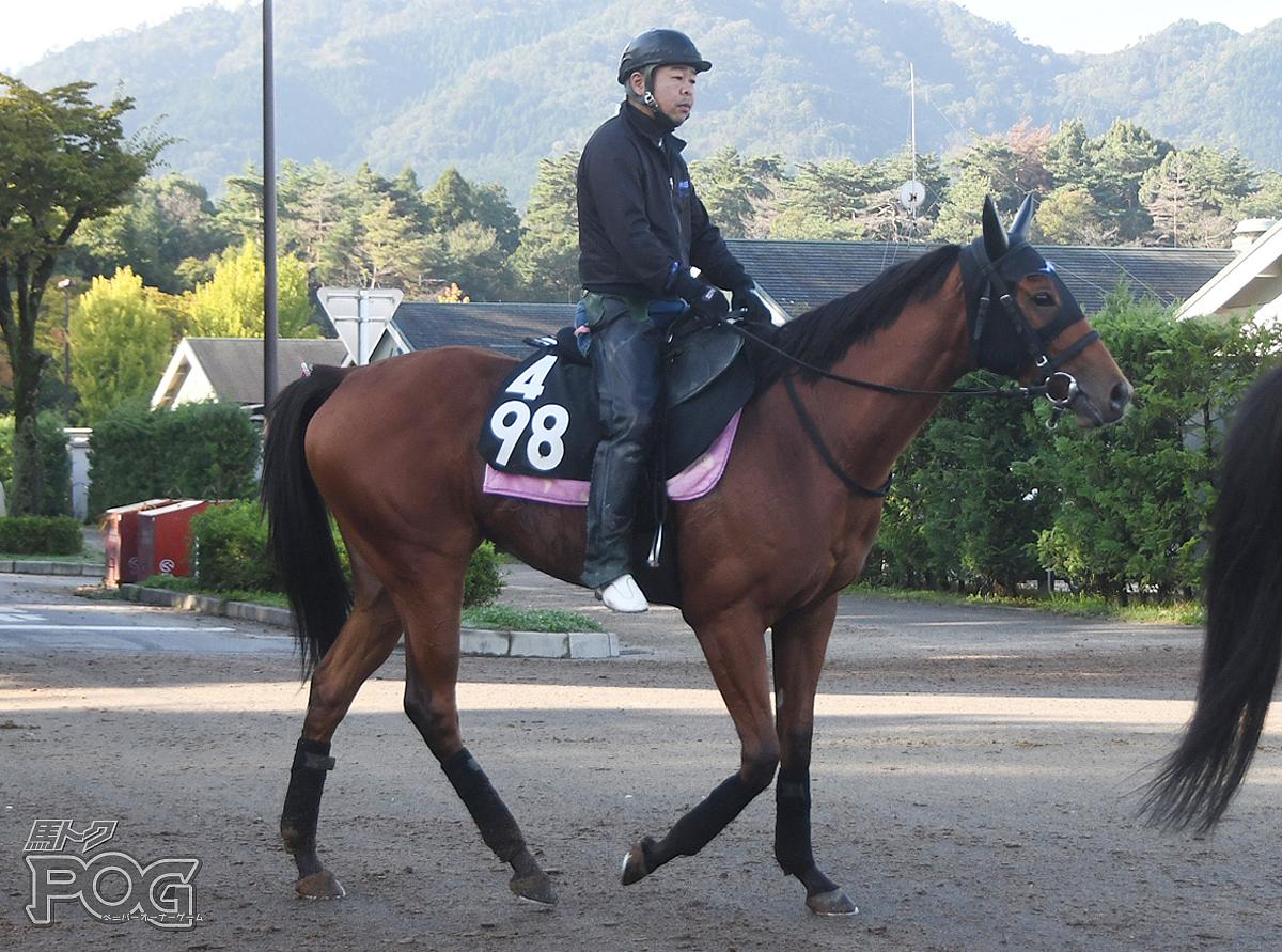 スイートレモネードの馬体写真