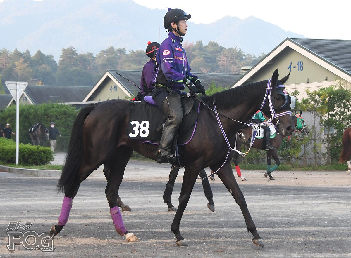 アドマイヤカラットの馬体写真