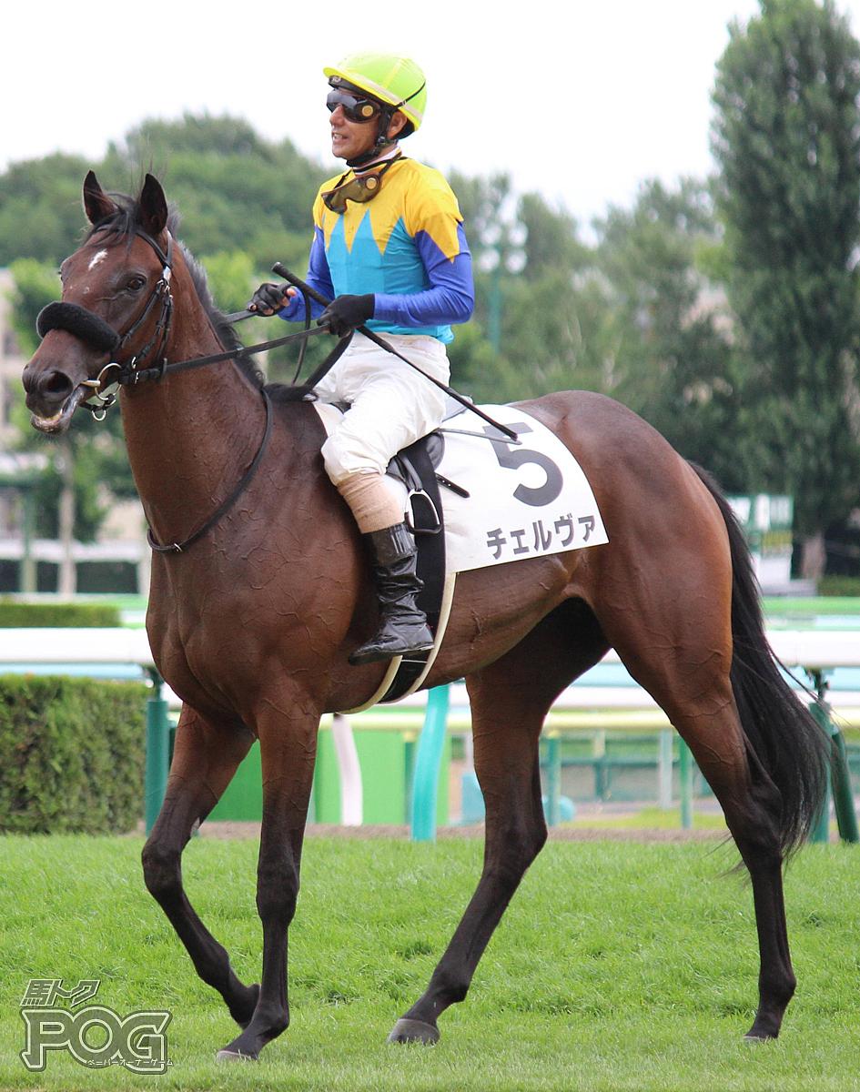 チェルヴァの馬体写真