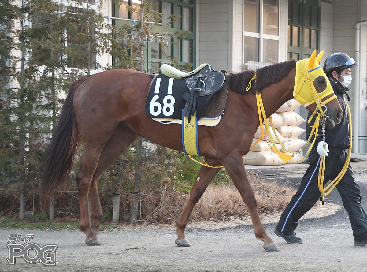 レンブランサの馬体写真