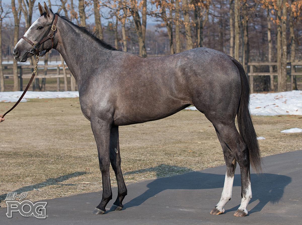 アモーレミオの馬体写真