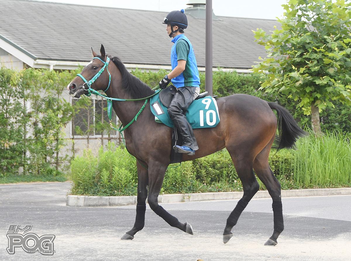 ボリウッドの馬体写真