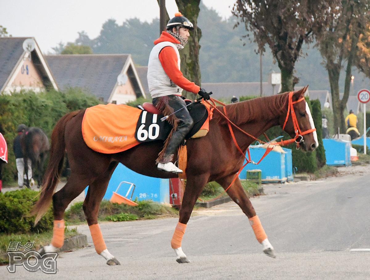 レッドジョルトの馬体写真