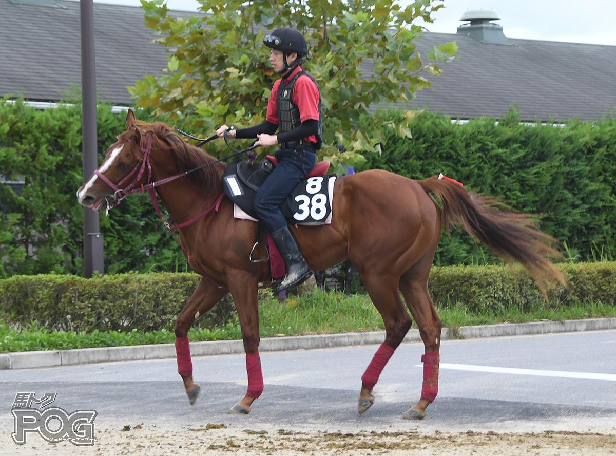 ピュールフォルスの馬体写真