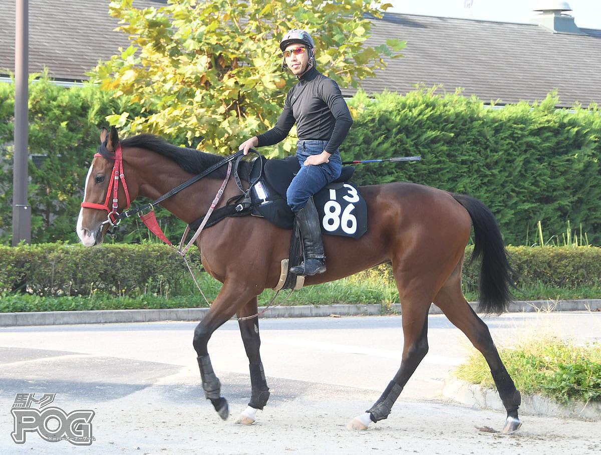 ルナステラの馬体写真