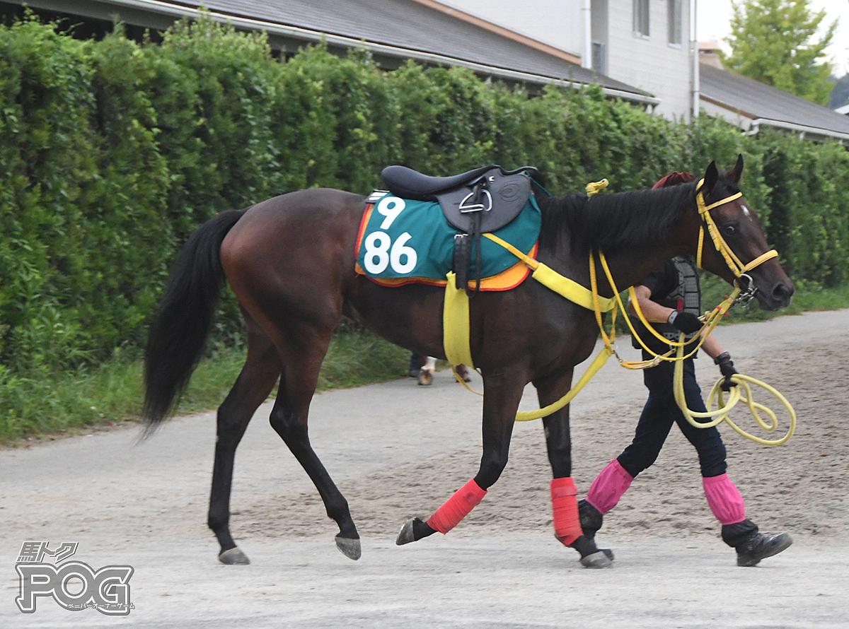メサルティムの馬体写真