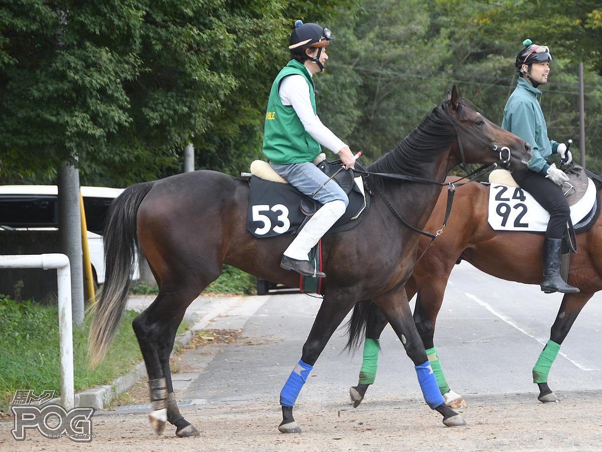 アプルーヴァルの馬体写真