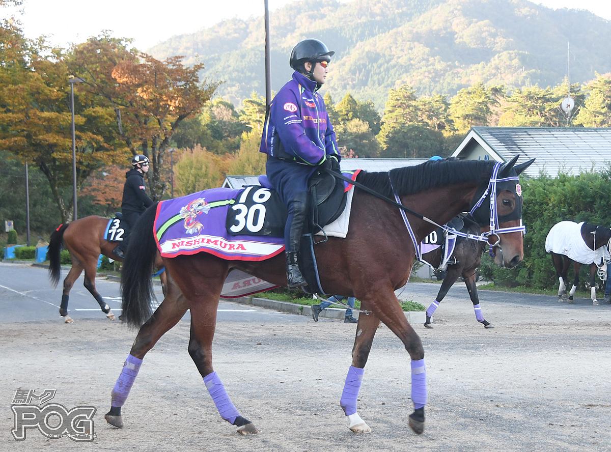 メバエの馬体写真