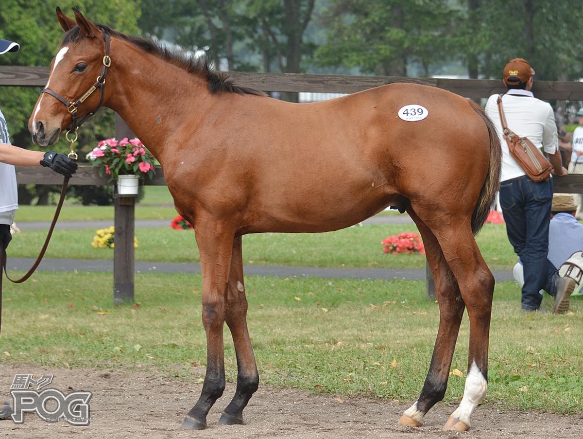 バララットゴールドの馬体写真