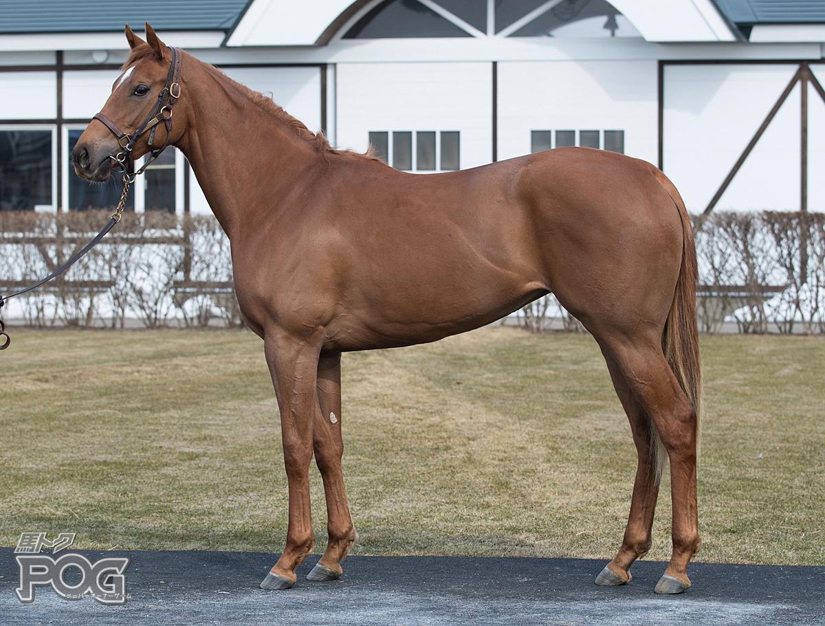 クリストフォリの馬体写真