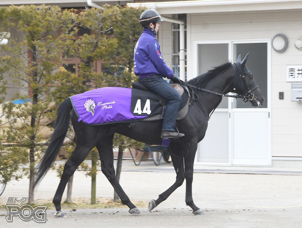 アドマイヤデジタルの馬体写真