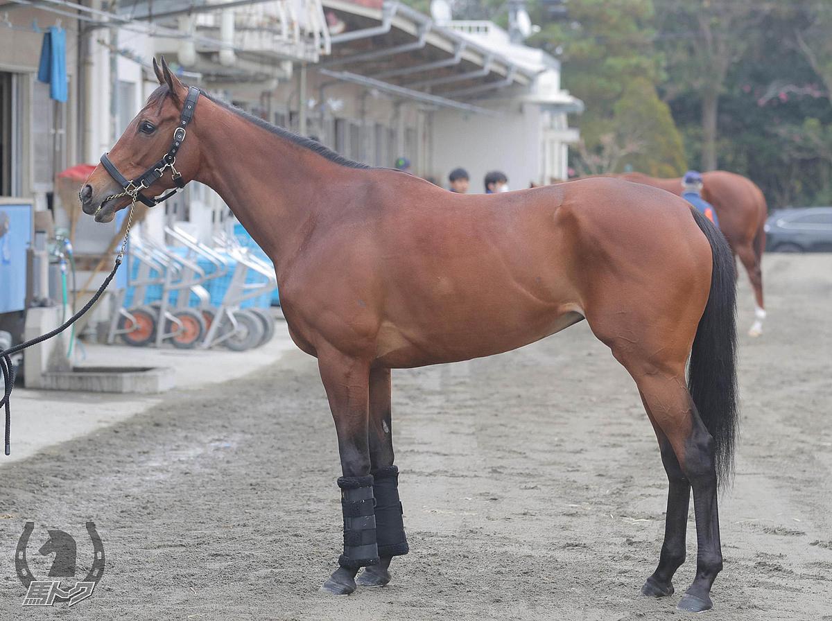アーモンドアイの馬体写真