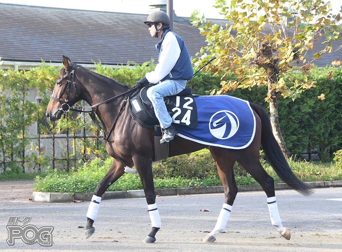 キュアサニーの馬体写真