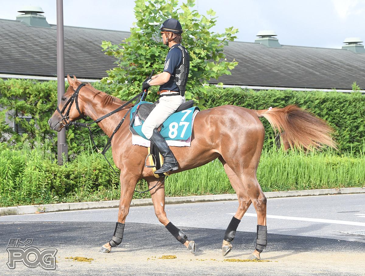 スーブレットの馬体写真