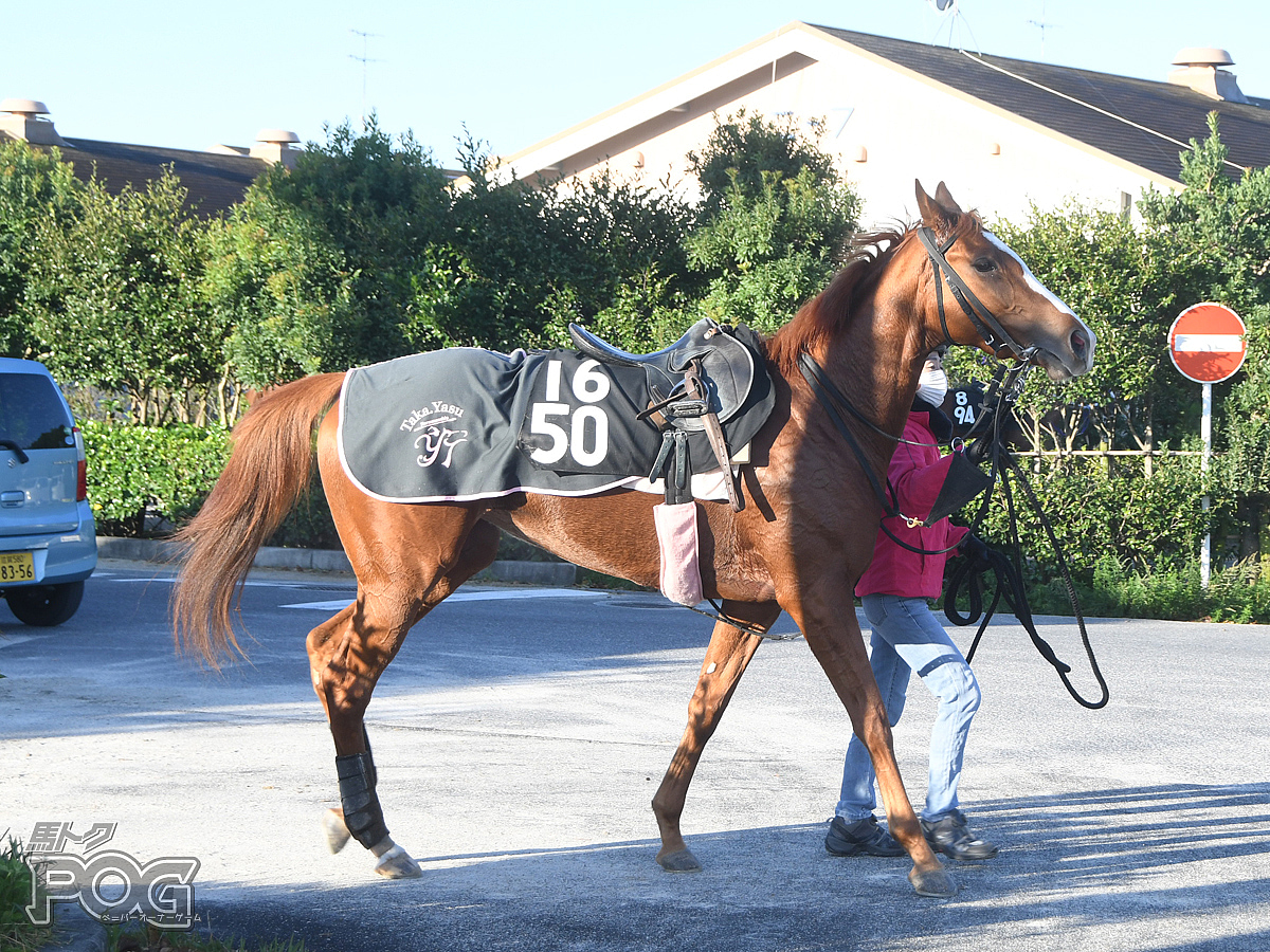 マロンコートの馬体写真