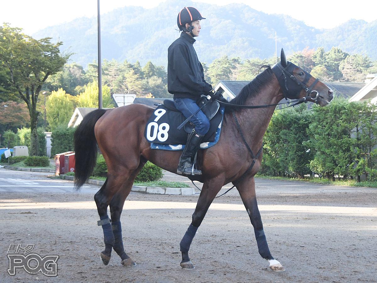 ブレイニーランの馬体写真
