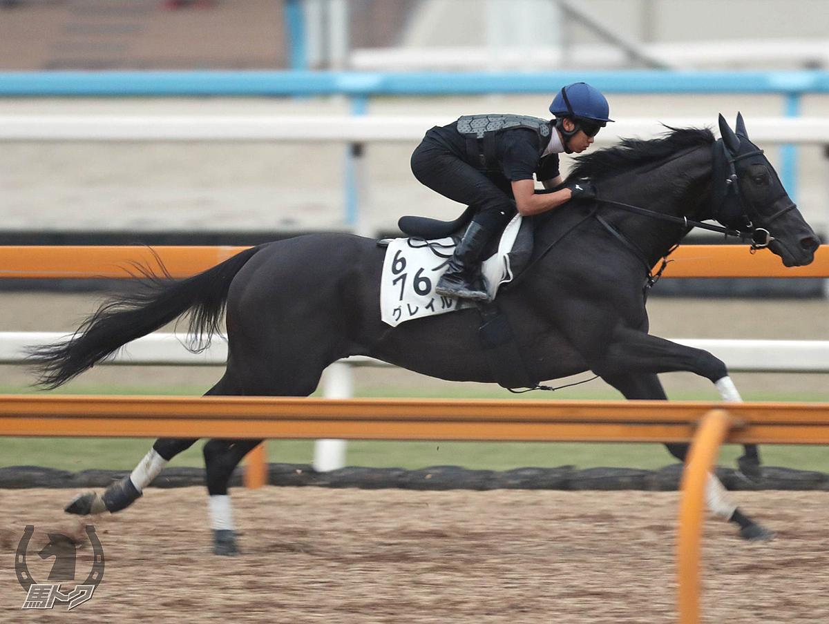 グレイルの馬体写真