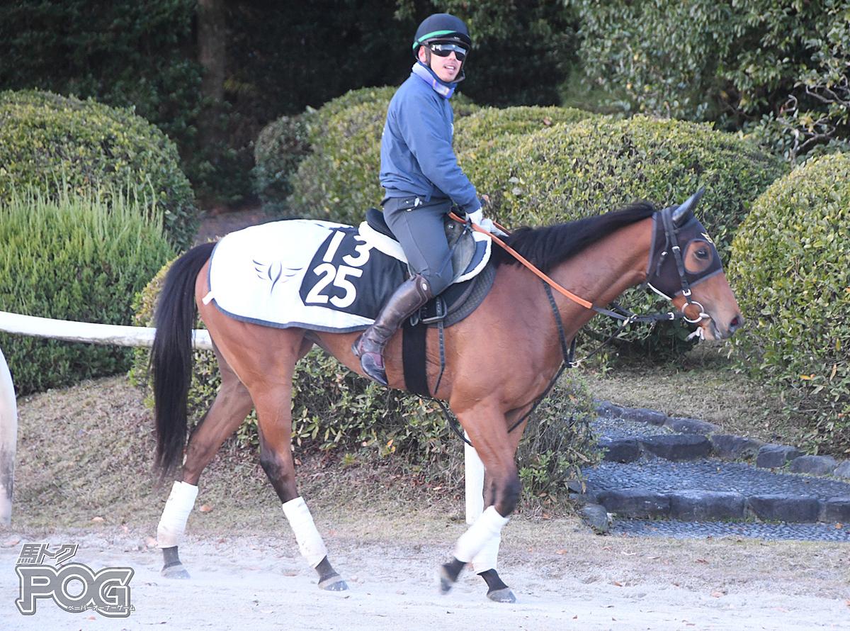 リーズンの馬体写真